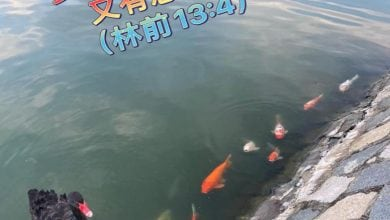 Photo of 28/8親親家長金句分享 Proverb sharing