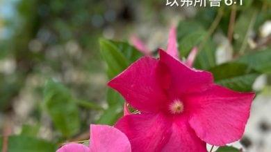 Photo of 4/9親親家長金句分享 Proverb sharing