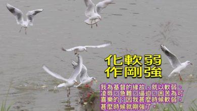 Photo of 23/10親親家長金句分享 Proverb sharing
