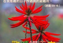 Photo of 6/11親親家長金句分享 Proverb sharing