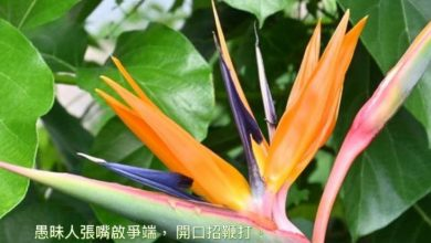 Photo of 13/11親親家長金句分享 Proverb sharing