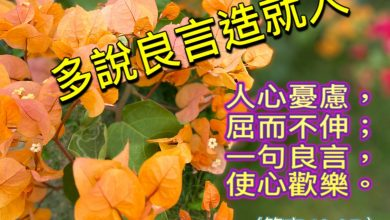 Photo of 11/12親親家長金句分享 Proverb sharing