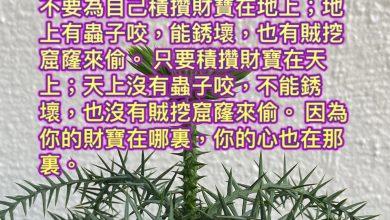 Photo of 5/3/2021金句分享