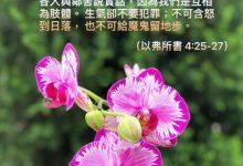 Photo of 30/4/2021金句分享