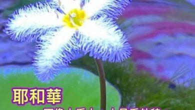 Photo of 21/5/2021金句分享